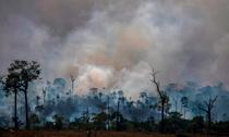 Мы - население Амазонии - полны страха. В скорости, вы к нам присоединитесь.