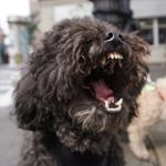 The Dogs of New York (@dogs_ny)